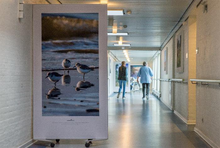 Lyddæmpende billede på skærmvæg på gang på plejehjem