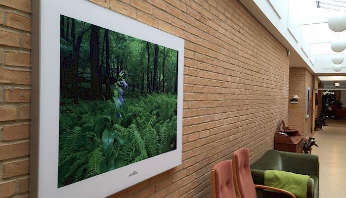 Eksempel på akustikbillede med naturmotiv på gangvæg i et plejehjem