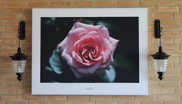 Wayfinding med stor rose på hospitaler og plejehjem