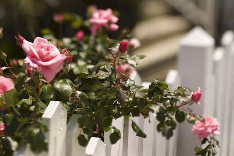 Hospitalskunst med fotografisk afbildning af blomster