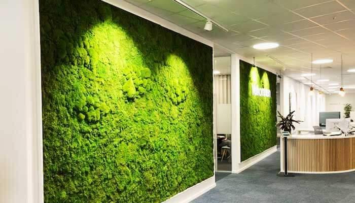 Planteservice - Indendørs planter på hospital modtagelse reception