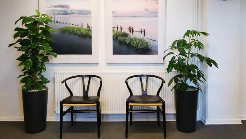 Kunst og planter i lægens venteværelse