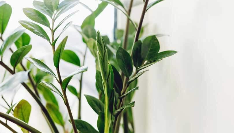 Potteplanter / stueplanter / indendørs planter på hospital